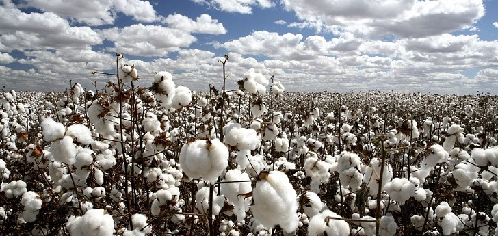 Cotton prices rise due to consumption and decrease of production