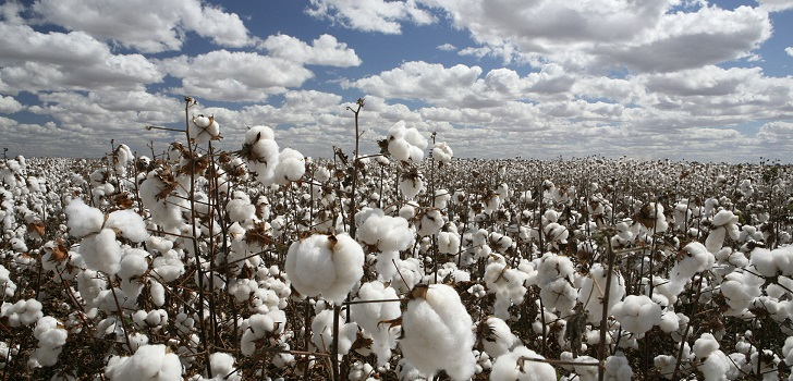 Cotton, threatened: stocks to drop by 1% for this season amid coronavirus cloudy prediction